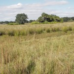 Cattle Ranch Ecological Characterization for Wetland Restoration