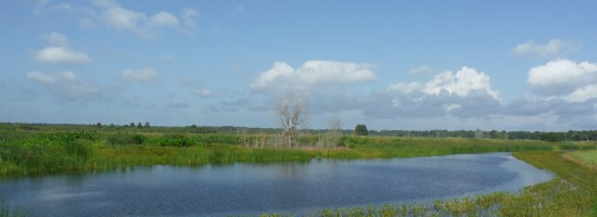 Wetland Reclamation 01