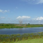 Evaluation of Wetland Reclamation
